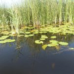 Canalul Bărbosu