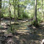 Pădurea Letea