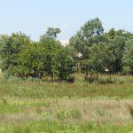 Caii semisălbăticiți din Pădurea Letea